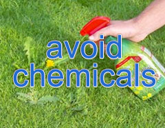 avoid weed killer and chemicals